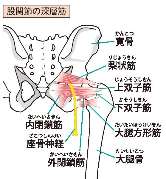 変形性股関節症へのアプローチ